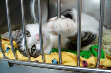 Cat, Rescue, Kitten, Shelter, Cage, Paw