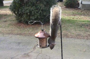 squirrel_bird_feeder