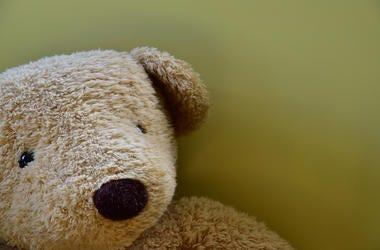 Teddy Bear, Face, Close Up, Wall