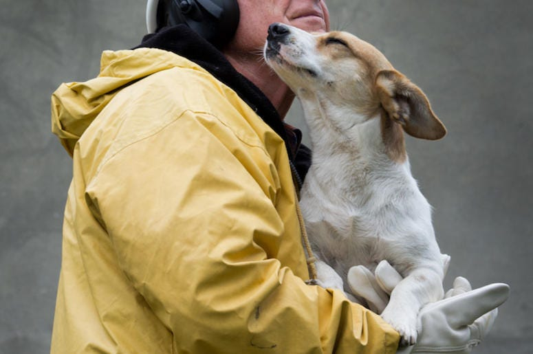 Man, Safety Suit, Firefighter, Holding Dog