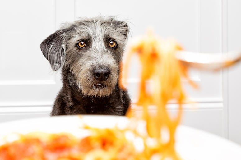 Dog, Spaghetti, Plate, Food