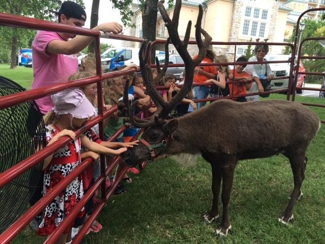 Children petting a reindeer at a public appearance