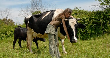 teen girl hugs a cow