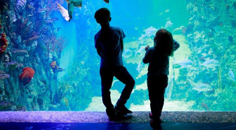 Kids looking in aquarium window at the zoo