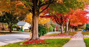 Neighborhood street with Fall colored trees