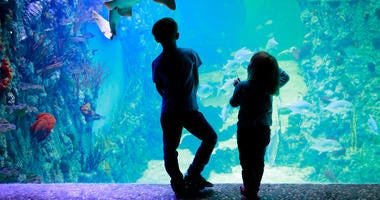 Kids looking in aquarium window at the zoo
