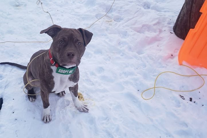 TML Dog Rescue, dog wants a forever home, foster dog, animal shelters in Minnesota, Rescue Dog