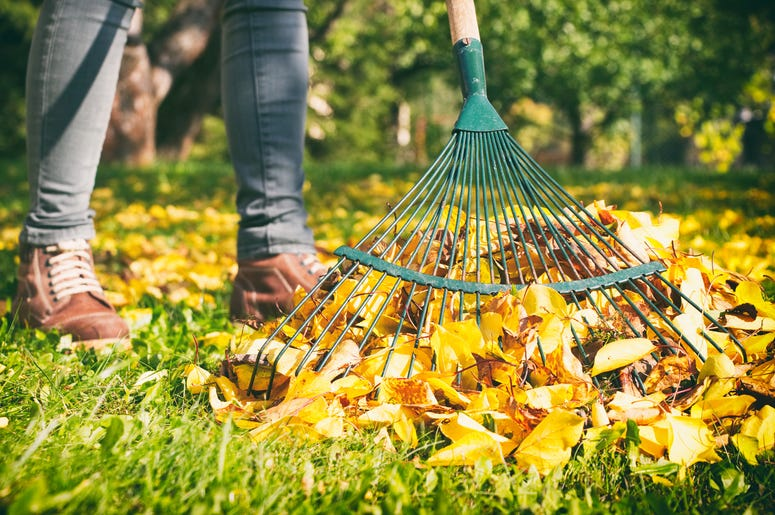 stop raking leaves, do i need to rake my leaves, why you should stop raking leaves