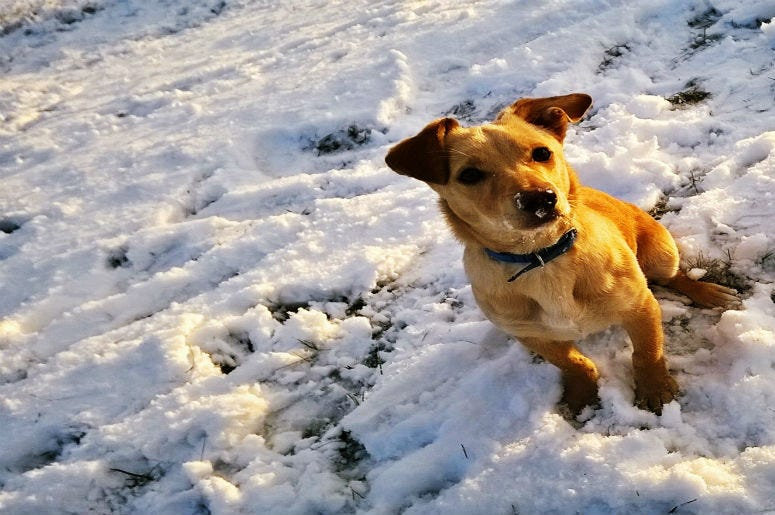 National Weather Service Issues Small Dog Warning