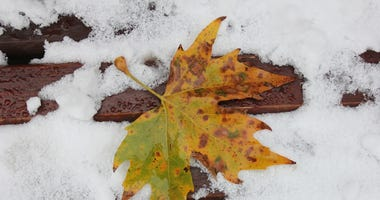 Sad leaf in the snow
