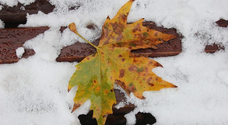Sad leaf in the snow