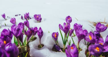 frost, flowers, spring