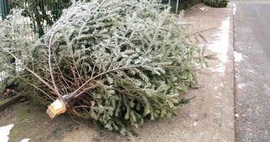 christmas tree dead