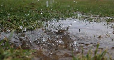 raindrops in grass