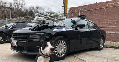 k9 with black car