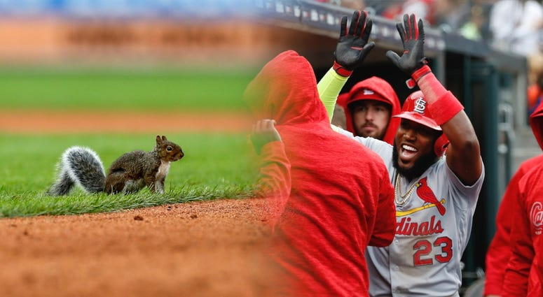 Rally squirrel in Detroit during St. Louis Cardinals win.