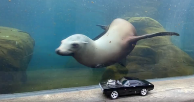 sea lion, remote-controlled car