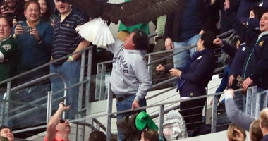 Clark, a bald eagle, lands on a fan before the game between the Notre Dame Fighting Irish and the Clemson Tigers in the 2018 Cotton Bowl