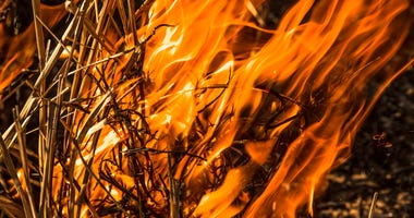 Close-up of an infernal forest fire that destroys an entire area of trees and bush