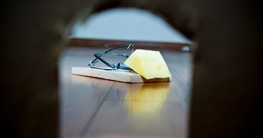 Mouse trap with cheese set next to mouse house.