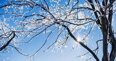 Snow covered trees on a clear frosty day. Beautiful winter landscape.