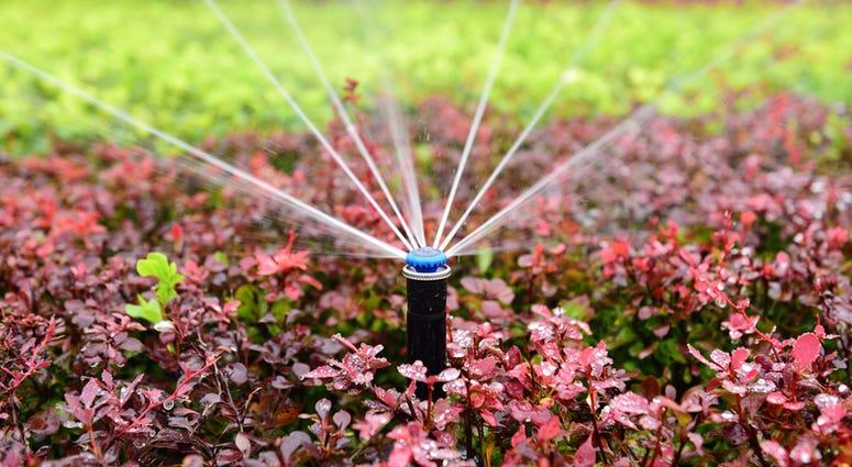 outdoor sprinkler system waters a flowerbed