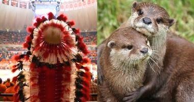 Illini may finally have a mascot to replace Chief Illiniwek: It's 'Alma Otter'