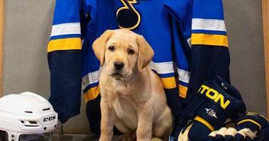St. Louis Blues puppy.