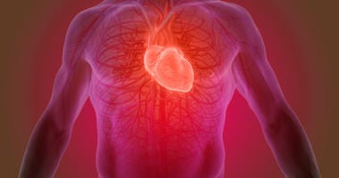 3D heart rendering
