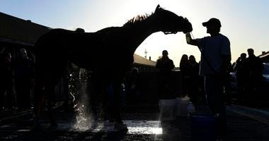 Kentucky Oaks hopeful Rayya receives a bath after morning workouts at Churchill Downs.