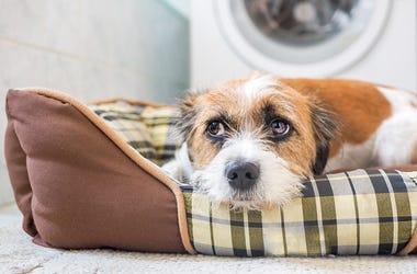 Hund liegt in seinem Körbchen im Badezimmer. Angst, Gewitter, Zufluchtsort.