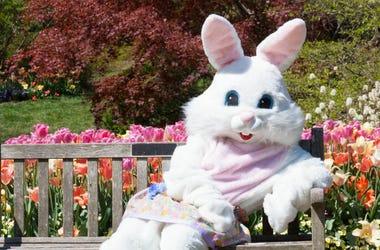El Conejo De Pascua Que Aterroriza