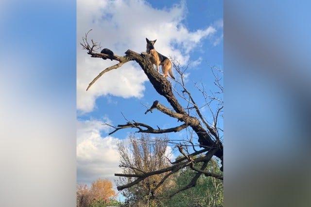 dog in tree