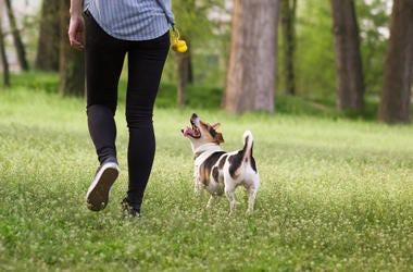walking dog