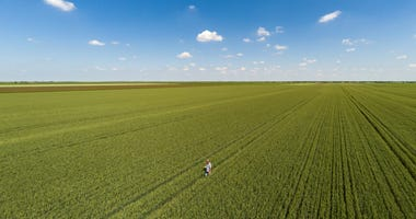 Annual Wheat Quality Tour conducted via Zoom in 2020