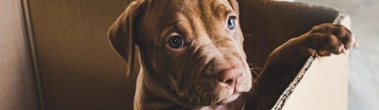 BBB issues warning about spike in pet scams