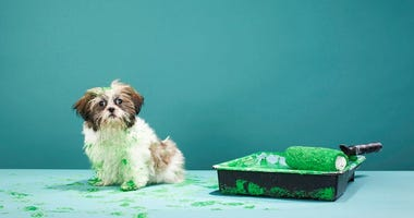 Adorable puppy born with rare green fur gets the perfect name