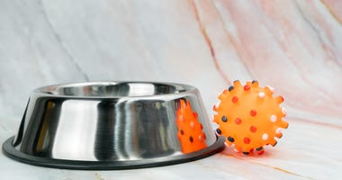 Stainless bowl and dog toy
