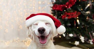 Happy puppy dog celebrating Christmas