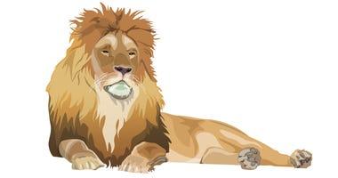 Lion lying down image