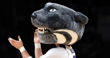 Kansas State mascot