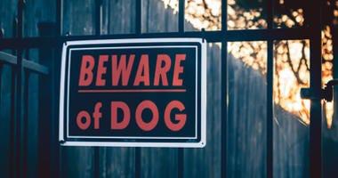 Runaway police dog bites Wichita boy