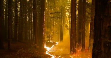 A forest burns as the CZU August Lightning Complex Fire advances, Thursday, Aug. 20, 2020, in Bonny Doon, Calif. (AP Photo/Marcio Jose Sanchez)