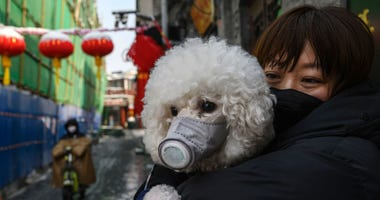 Dog with face maske