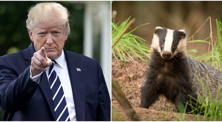 Trump and Badger