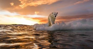 A polar bear stands on melting sea ice at sunset near Harbour Islands in Canada.  PAUL SOUDERS | WORLDFOTO / GETTY IMAGES