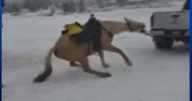 Horse dragged CBS News