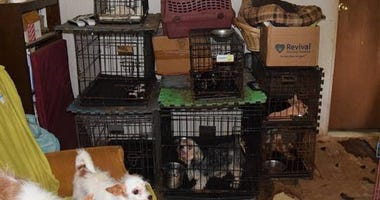 Dogs Seized By Humane Society of North Texas