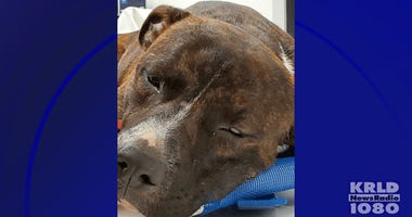 Dallas Police Animal Cruelty Case