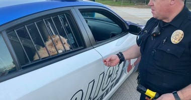 Arlington PD Puppies